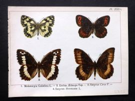 Joanny Martin 1902 Antique Butterfly Print 13a